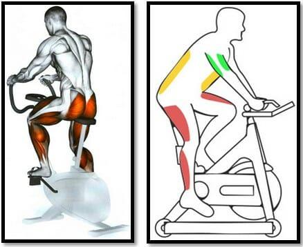 велотренажер мышцы в работе