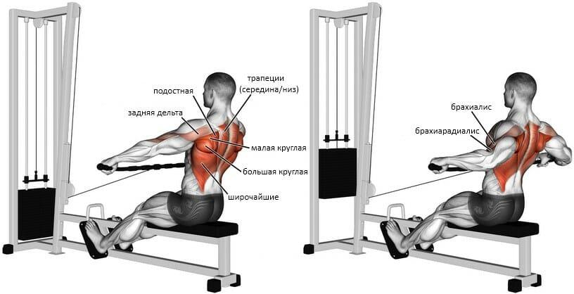 Тяга нижнего блока широким хватом мышцы