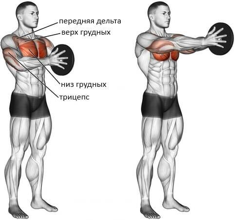 Жим свенда мышцы