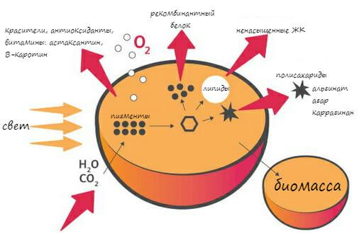 воздействие тепла на продукты