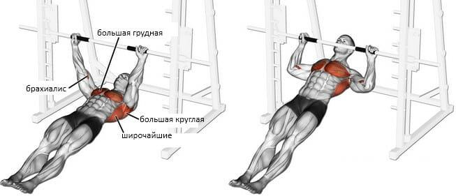 Горизонтальные подтягивания мышцы
