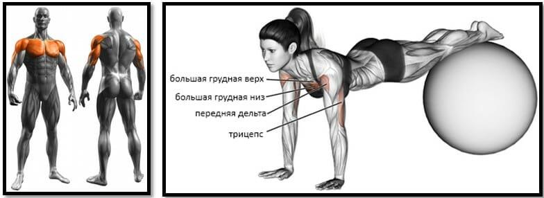 Отжимания под углом вниз мышцы