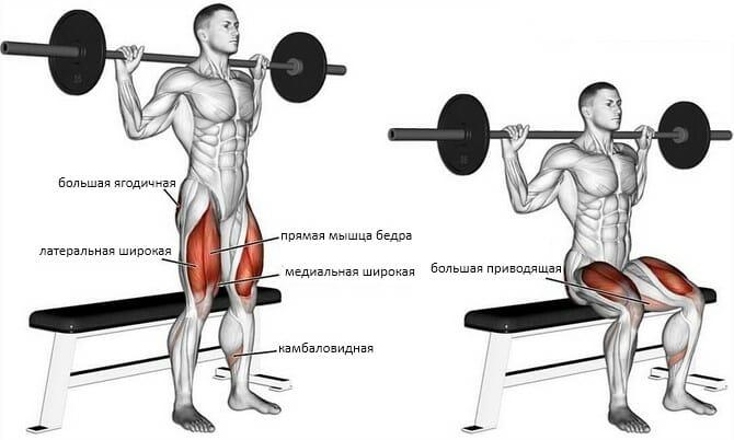 Приседания на скамью мышцы