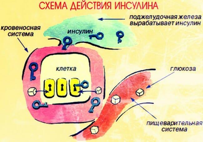 схема действия инсулина