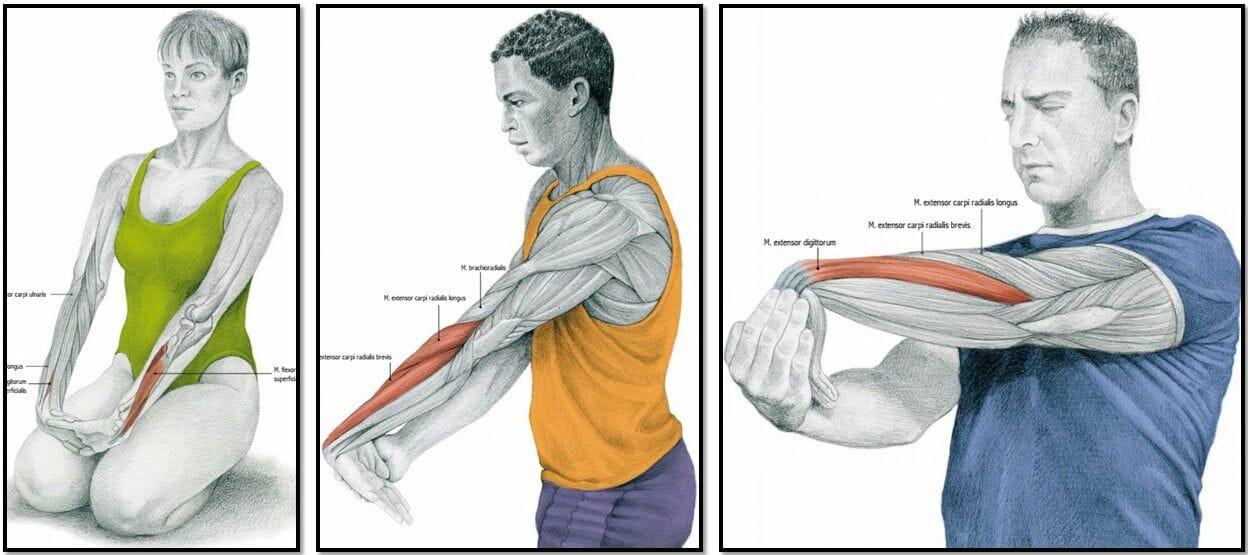 упражнения на растяжку мышцы предплечий
