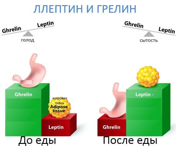 гормоны лептин и грелин, аппетит