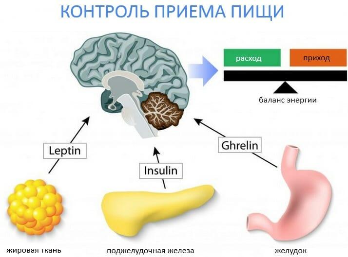 контроль приема пищи, гормоны