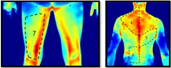 мышцы после выполнения упражнений в инфракрасном спектре
