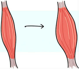 рост мышц факторы