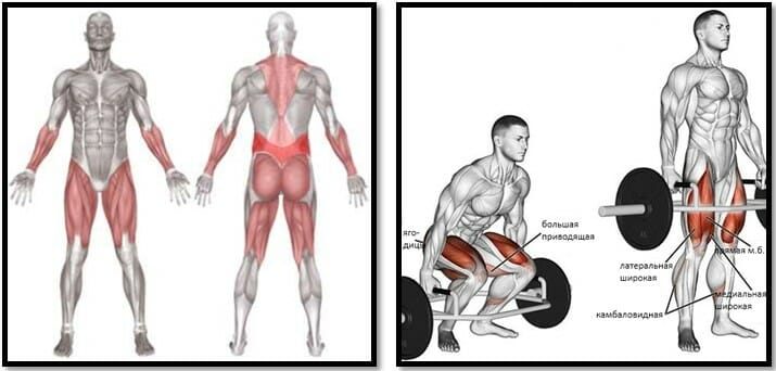 Становая тяга с трэп грифом мышцы
