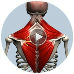 комплекс muscle азбука бодибилдинга