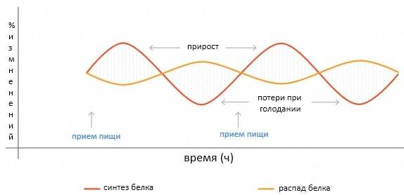 сбалансированный цикл клеточной регенерации