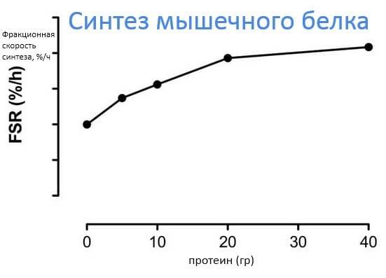 синтез мышечного белка - количество белка для роста мышц, исследования