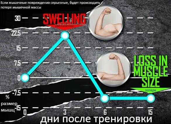 величина мышечных повреждений и размер мышц