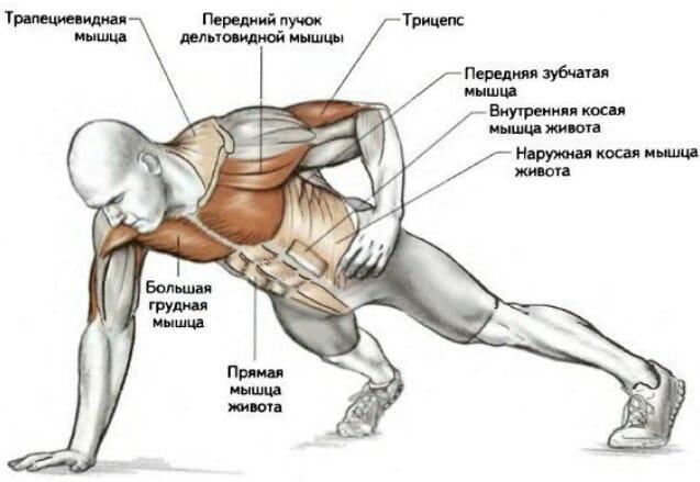Отжимания на одной руке мышцы