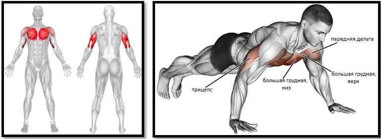 Отжимания с широкой постановкой рук мышцы