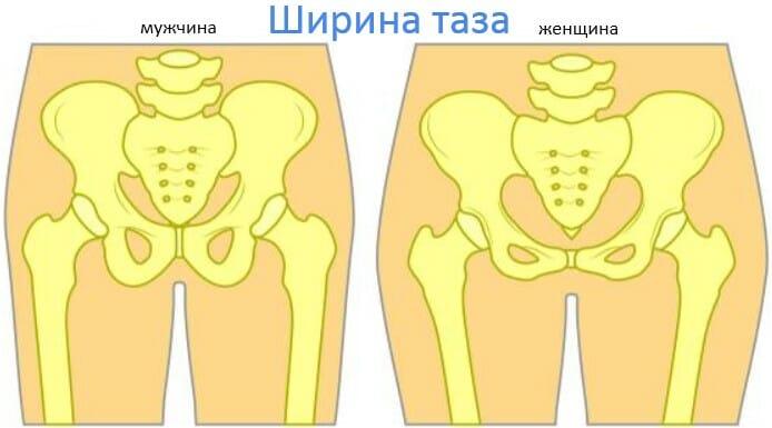 ширина таза у мужчин и женщин