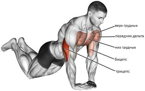 Алмазные отжимания мышцы