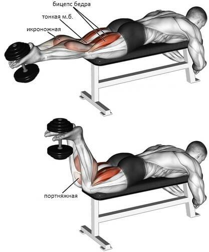 Сгибания ног лежа с гантелью мышцы