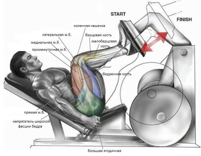 Жим одной ногой в тренажере мышцы