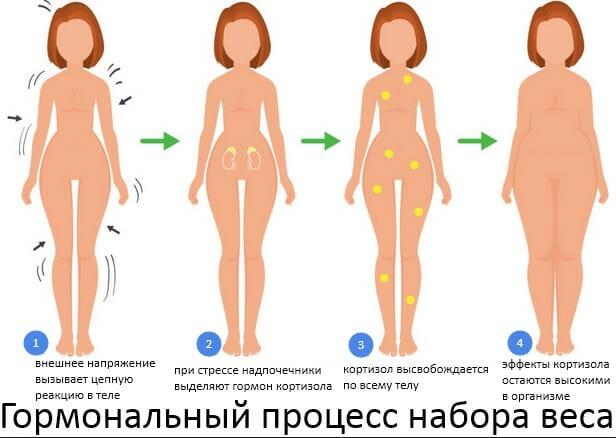 гормональный процесс набора веса