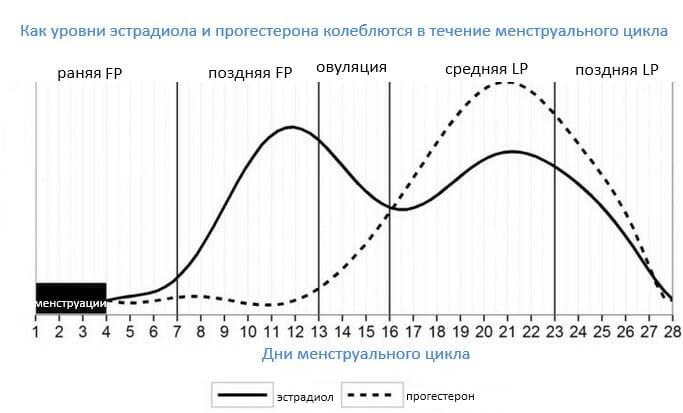 уровни эстрадиола и прогестерона в течение менструального цикла