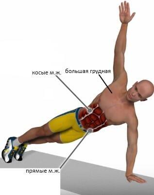 Т-отжимания мышцы