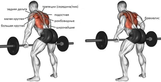 Тяга штанги в наклоне в тренажере Смита мышцы