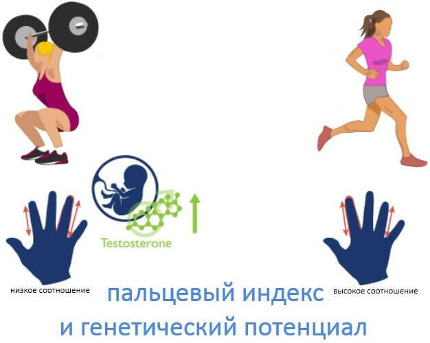 пальцевый индекс и генетический потенциал