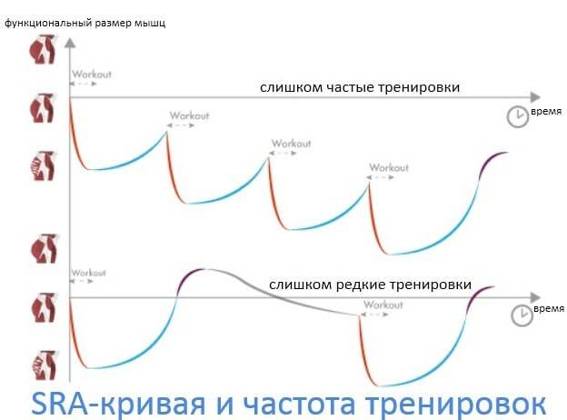 sra кривая и частота тренировок