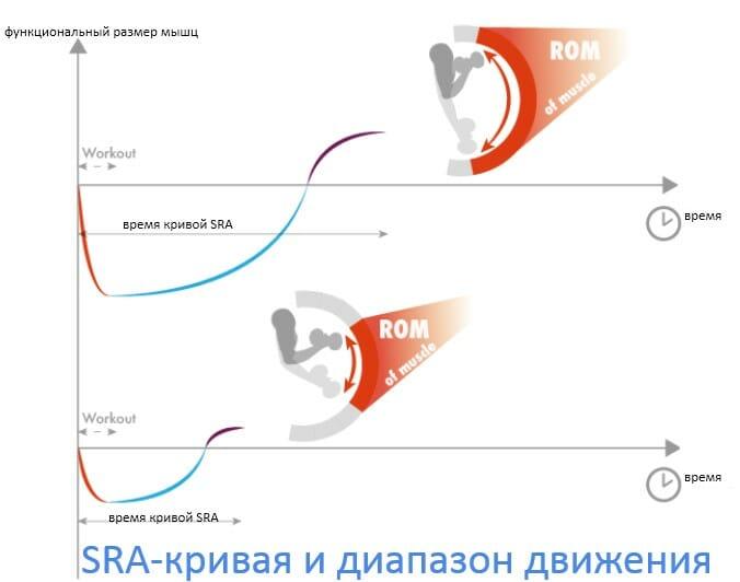 sra кривая и диапазон движения