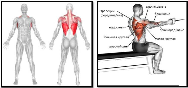 тяга одной рукой стоя у блока мышцы