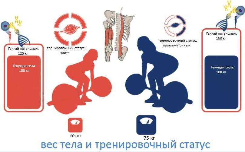 вес тела и тренировочный статус