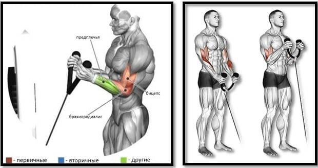 Подъемы хватом молот на блоке мышцы
