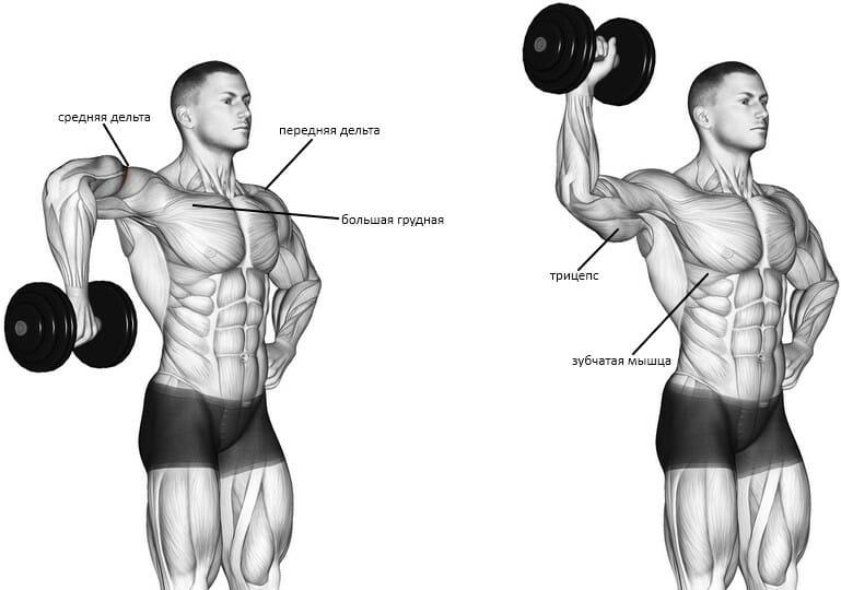 Кубинский жим мышцы