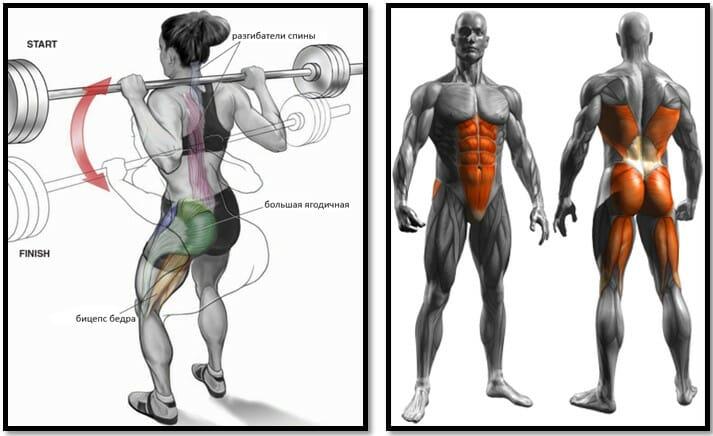 Наклоны со штангой на плечах в Смита мышцы