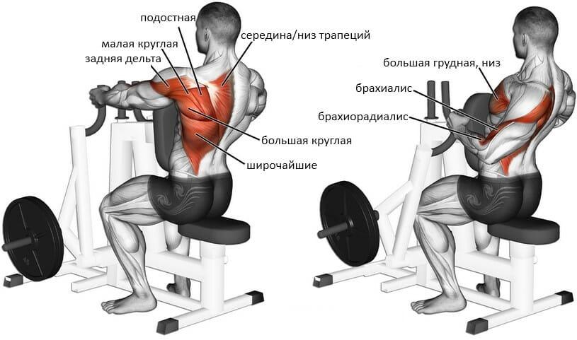 Тяга в тренажере Хаммер мышцы