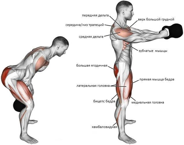 Махи гирей мышцы