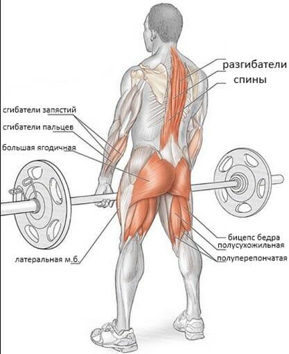 Становая тяга в смита мышцы