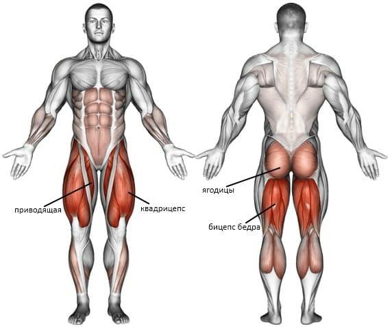 Приседания с гирями мышцы