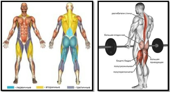 Румынская тяга в смита мышцы