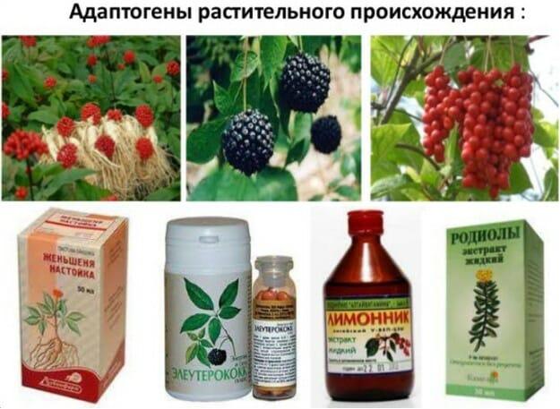 адаптогены растительные