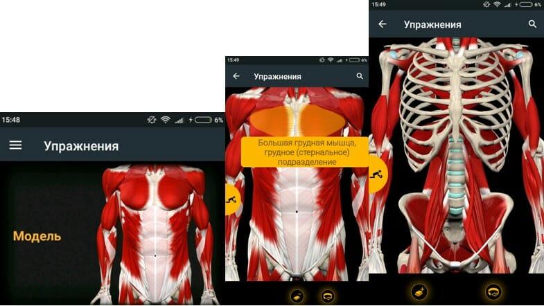 модель тела в приложении muscle and motion