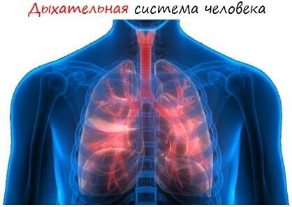 Дыхательная система человека лого