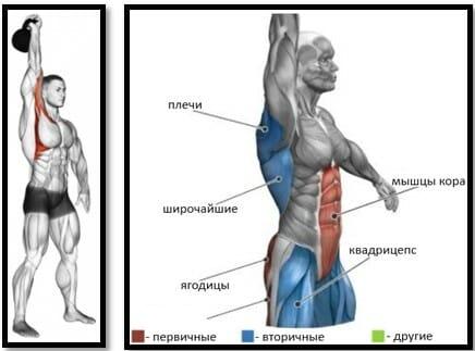 Жим гири мышцы