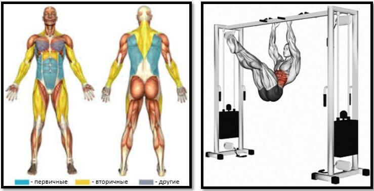 Подтягивания уголком мышцы