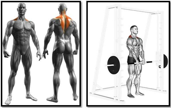 Шраги в тренажере Смита мышцы