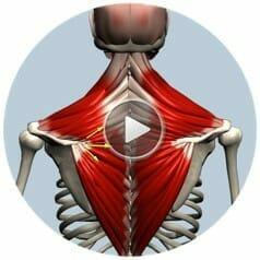 muscle and motion приложение 2019