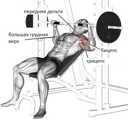Жим штанги лежа под углом вверх в тренажере смита мышцы