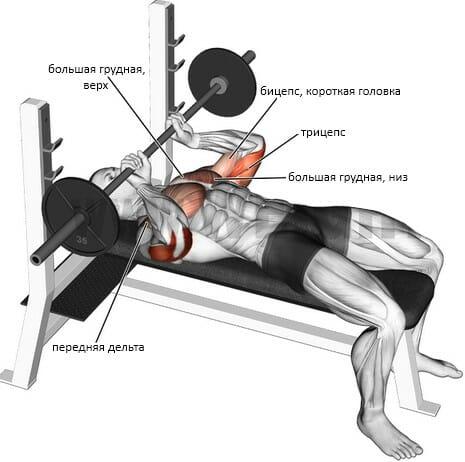 Калифорнийский жим мышцы